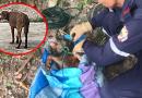 Desalmado lanzó un canino al río, amarrado dentro de un costal