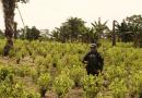 Choques entre campesinos y el Esmad por operaciones de erradicación forzada en Putumayo