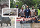 Corpoamazonia incautó carne y huevos de fauna silvestre en operativos de control